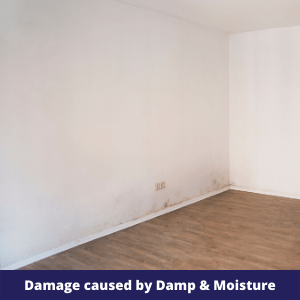 Damage cause by Damp & Moisture