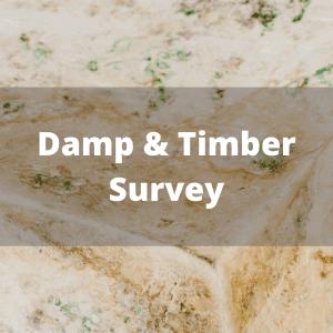Damp & Timber Surveys